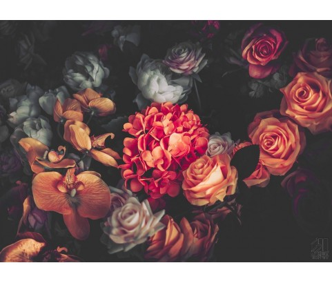 Fototapeta Róże